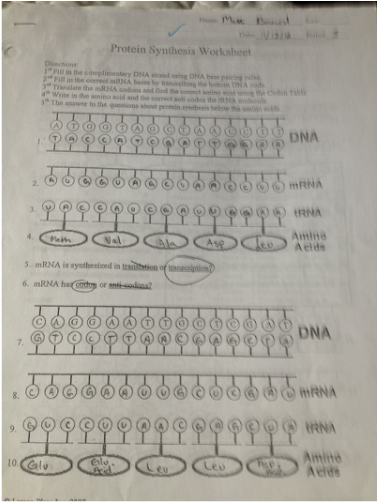 Printables Protein Synthesis Worksheet Answers enzymes dna and protein synthesis matt bowards aice biology worksheet