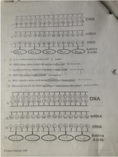 Worksheets Protein Synthesis Worksheet Answer Key protein synthesis worksheet answer key abitlikethis