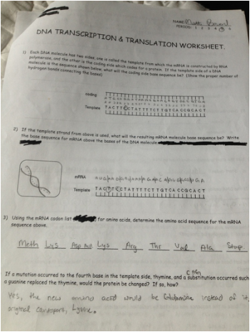 Worksheets Dna Transcription And Translation Worksheet enzymes dna and protein synthesis matt bowards aice biology transcription translation worksheet
